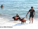 """Palinuro: I """"cani bagnino"""" salvano dalle onde due ragazzi di Buonabitacolo"""