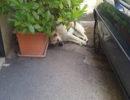 Buccino: cani randagi nel centro del paese. Commercianti e residenti sul piede di guerra