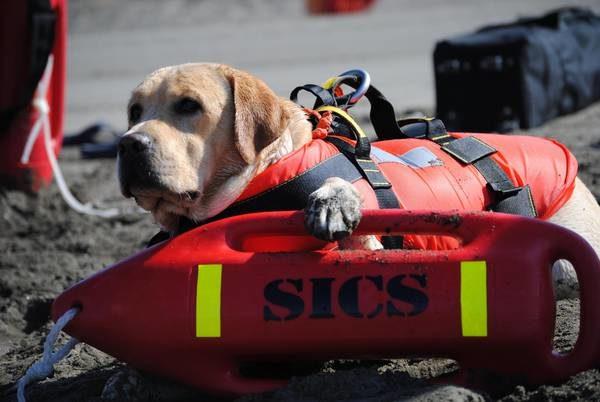 Scuola cani salvataggio