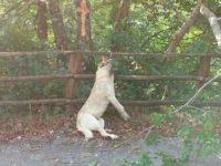 Orrore a Sanza. Cane trovato impiccato sul Monte Cervati