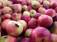 Farmacia 3.0 – il succo di mele è un potente antitumorale