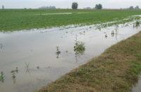 Piogge alluvionali del 2010. Arrivano gli indennizzi per gli agricoltori del Tanagro