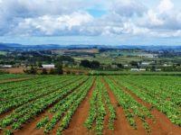 Agricoltura Campania. Oltre 85 milioni di euro per misure connesse alla superficie e agli animali