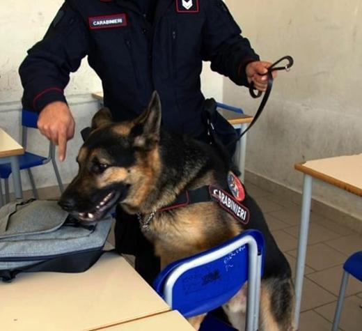 cane droga scuola evidenza