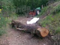 Tragedia a Sacco. Cade da un albero e sbatte la testa. Perde la vita 52enne
