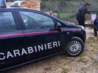 Campagna straordinaria dei Carabinieri di controllo ambientale. Sequestri a Teggiano, Padula e Montesano
