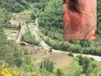 Vietri di Potenza:rincorso da un cinghiale con i cuccioli. 55enne fugge via e si ferisce al volto
