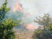 Vasto incendio a Campagna, in fiamme oltre 20 ettari di macchia mediterranea