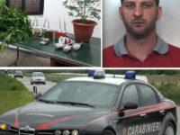Nasconde in casa piante di marijuana, bombe carta e cartucce. Arrestato 35enne di Colliano