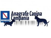 Caggiano: al via la campagna di sensibilizzazione per la registrazione all'anagrafe canina