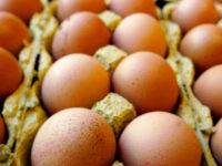 Caso Fipronil. Le uova contaminate finiscono in alcuni ristoranti e pasticcerie del potentino