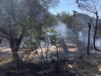 Vasto incendio a Vietri di Potenza. Le fiamme distruggono duecento ulivi