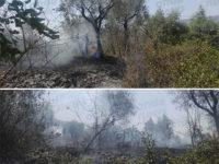Incendio in località Sarconi a Polla. In fiamme oltre un centinaio di ulivi