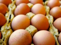 Caso Fipronil. A Potenza ritirati dalla vendita 15 kg di pasticcini preparati con uova a rischio