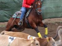 L'Erbanito Horse Team di San Rufo sul podio del Campionato Fitetrec Ante Campania di Team Penning