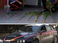 Pertosa: trovate e sequestrate piante di cannabis indica nella località montana Arnaci-Taverna