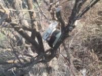 A caccia nella riserva naturale protetta Foce Sele-Tanagro. Tre uomini denunciati a Serre