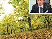 """Produzione di castagne in crescita. Vincenzo Tropiano, direttore Coldiretti:""""Segnali positivi"""""""