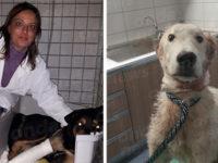 Cane colpito da una fucilata e trovato agonizzante lungo la Teggiano-Polla. Salvo per miracolo