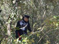 Sorpresi a raccogliere abusivamente delle castagne. Denunciati due uomini a Petina