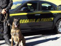 Cani antidroga sugli autobus a Vallo della Lucania. Sequestrata hashish trovata a bordo