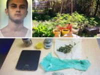 Coltiva 200 piante di marijuana. Arrestato 22enne di Ricigliano