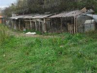 Canile abusivo a Contursi.Animali costretti a vivere tra gli escrementi e rinchiusi in gabbie fatiscenti