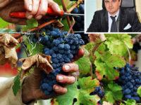 """Vendemmia 2017. Il direttore Coldiretti Vincenzo Tropiano:""""Produzione di vino scarsa ma qualità elevata"""""""