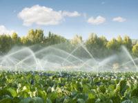 Agricoltura. La Regione Campania approva il Regolamento sull'utilizzo delle acque potabili ed irrigue