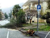 Maltempo nel Vallo di Diano. A Teggiano le raffiche di vento fanno cadere in strada un grosso albero
