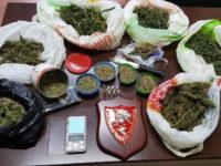 Pertosa: coniugi nascondono in casa marijuana e 3500 semi di canapa. Arrestati grazie al cane Attila