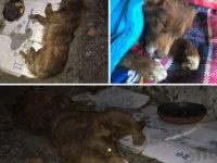 """Cane malmenato ritrovato agonizzante a San Rufo. Lo sdegno di una ragazza:""""Si divertono causando dolore"""""""