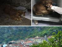 Operazione salvavita per il cane malmenato a San Rufo. Al via la colletta per pagare le cure