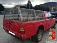 Trasporta agnelli vivi senza autorizzazione. Nei guai un uomo sul Raccordo Sicignano-Potenza