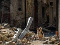 La Protezione Civile si occuperà del soccorso animali. Al decreto ha contribuito il CeRVEnE di Auletta