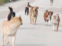 Randagismo. A Casalbuono un'ordinanza detta le linee per limitare la presenza di cani sul territorio