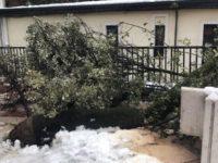 Sala Consilina: albero si spezza a causa della neve e cade sul marciapiede di Corso Vittorio Emanuele