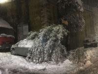 Padula: albero si spezza sotto il peso della neve e cade su un'auto in sosta