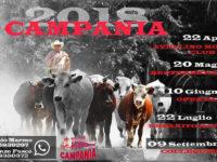 L'Erbanito Horse Team di San Rufo domani al Campionato Fitetrec Ante Campania di Team Penning