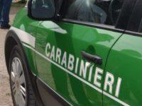 Incendi estivi, i Carabinieri Forestali di Salerno controllano i territori a rischio