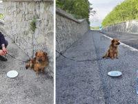 Abbandonato e legato al guardrail sulla Bussentina, cane salvato dalla Polizia Stradale di Sapri