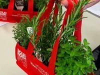 """""""Con le erbe aromatiche"""" di AISM contro la sclerosi multipla torna nelle piazze del Vallo di Diano"""