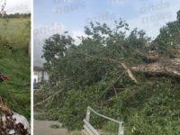 Maltempo e forte vento. Alberi abbattuti dalle violente raffiche a Padula e Sala Consilina