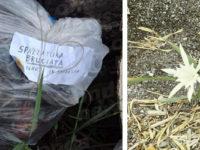 """Cumuli di rifiuti lungo il litorale di Sapri.""""Fare Verde Cilento"""" sporge una denuncia contro ignoti"""