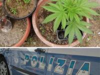 Scoperto in casa con piante di marijuana e semi di cannabis. Arrestato 21enne di Battipaglia