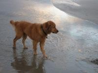 A Sapri una spiaggia libera per i cani. Fissate dall'Amministrazione comunale le regole da rispettare