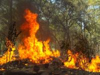Protezione dei boschi dagli incendi. Sì dal Consiglio regionale della Basilicata ad una proposta di legge