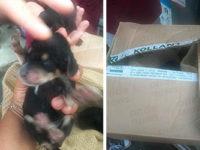 Cuccioli di cane abbandonati in uno scatolo a Buonabitacolo. Salvati dagli operatori ecologici