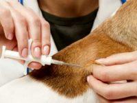 Monte San Giacomo: il 5 agosto microchippatura gratuita dei cani e iscrizione all'anagrafe canina