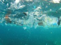 Parco Nazionale. Stop all'uso di stoviglie monouso e imballaggi in plastica nell'area protetta